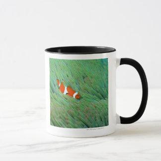 Mug Fermez-vous d'un poisson d'anémone de clown,