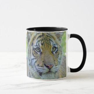 Mug Fin de CUB de tigre vers le haut de portrait