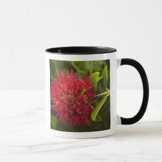 Mug Fleur de Pohutukawa, Dunedin