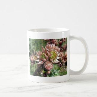 Mug Fleurs de poule et de poussins (Sempervivum)