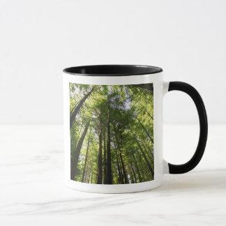 Mug Forêt de séquoia, Rotorua, Nouvelle Zélande