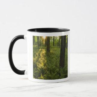 Mug Fougères dans la forêt dans Grafton, le
