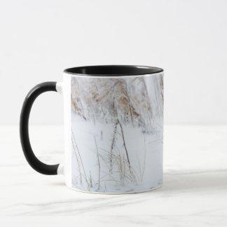 Mug Fox arctique