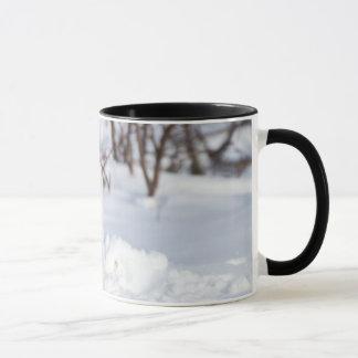 Mug Fox arctique en hiver