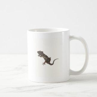 Mug gecko