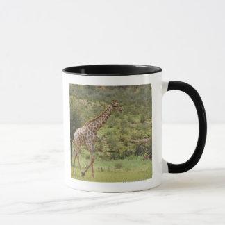 Mug Girafe, camelopardalis de Giraffa, Kgalagadi