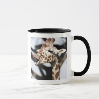 Mug Girafe réticulée faite face drôle, San Francisco