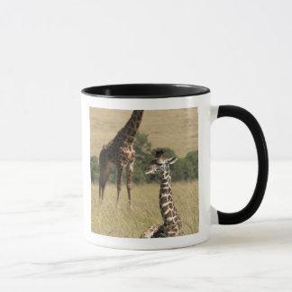 Mug Girafes de masai, camelopardalis de Giraffa