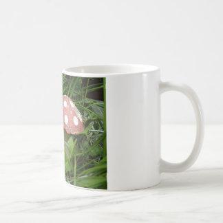 Mug Gnome et champignon