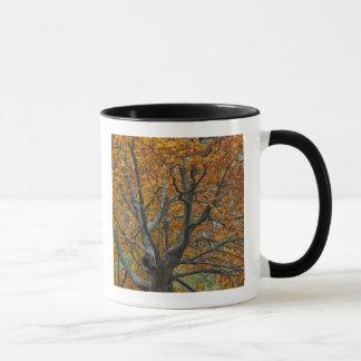 Mug Grand arbre d'érable en automne, lac bas, près de