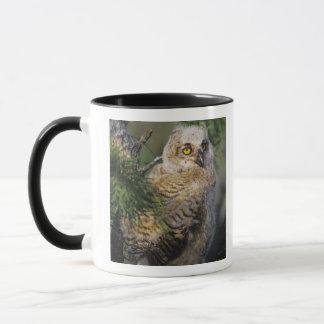 Mug Grand hibou à cornes, virginianus de Bubo, jeune