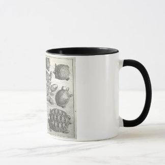 Mug Gravure à l'eau-forte vintage de tortue