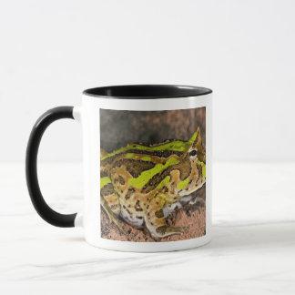 Mug Grenouille brésilienne de klaxon, cornuta de