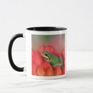 Mug Grenouille d'arbre Pacifique sur les fleurs dans
