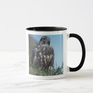 Mug gyrfalcon, rusticolus de Falco, jeune obtenant 2