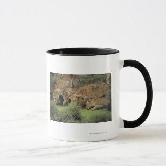Mug Herbe sentante africaine de lions (Panthera Lion),