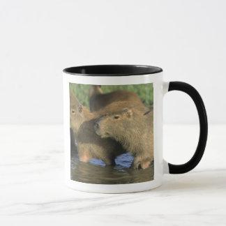Mug Hydrochaeris de Capybara, de Hydrochaeris), monde