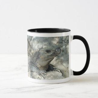 Mug Iguane Lounging