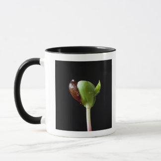 Mug Jeunes plantes d'Apple avec la coquille de graine