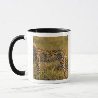 Mug Jubatus d'Acinonyx de guépard) sur la plaine,