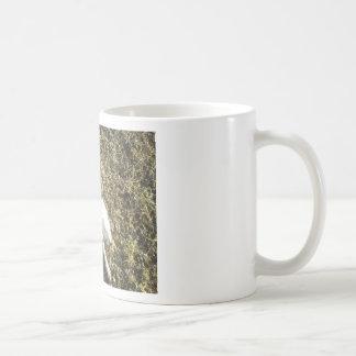 Mug Kevin le Dalmate