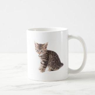 Mug kitten