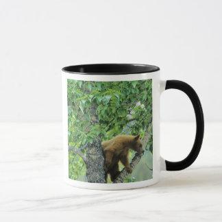 Mug La cannelle a coloré l'ours noir dans l'arbre de