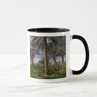 Mug La Tunisie, région de Ksour, Ksar Ghilane, palmier