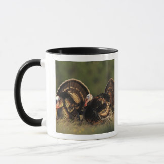 Mug La Turquie sauvage, gallopavo de Meleagris, mâles