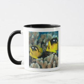 Mug La vie sous-marine ; POISSONS :  Une paire de