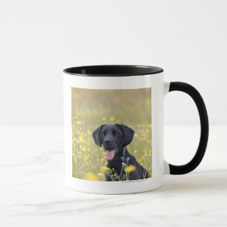 Mug Labrador noir 16 mois