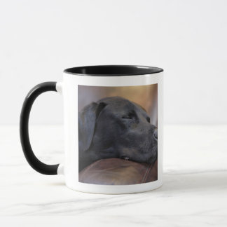 Mug Labrador noir endormi sur le sofa, plan rapproché