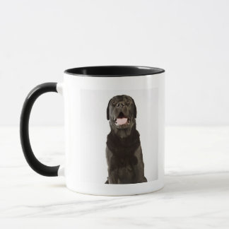 Mug Labrador noir (familiaris de Canis), haletant,