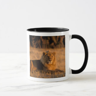 Mug L'Afrique, Botswana, delta d'Okavango. Lion