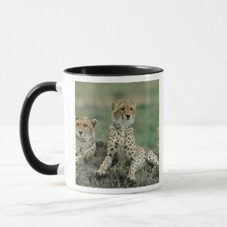 Mug L'Afrique, Kenya, guépards