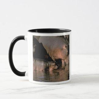 Mug L'Afrique, Kenya, masai Mara. Hippopotames communs