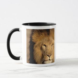 Mug L'Afrique, Kenya, masai Mara. Mâle de lion
