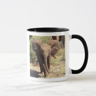 Mug L'Afrique, Kenya, parc national d'Amboseli.