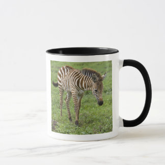Mug L'Afrique. La Tanzanie. Colt de zèbre chez
