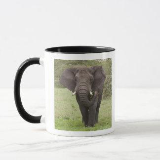 Mug L'Afrique. La Tanzanie. Éléphant au cratère de