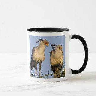 Mug L'Afrique. La Tanzanie. Secrétaire oiseaux chez