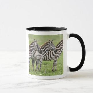 Mug L'Afrique. La Tanzanie. Zèbres au cratère de