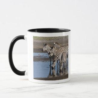 Mug L'Afrique. La Tanzanie. Zèbres buvant chez Ndutu