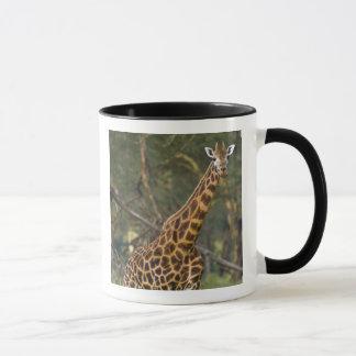 Mug L'Afrique. Le Kenya. La girafe de Rothschild au
