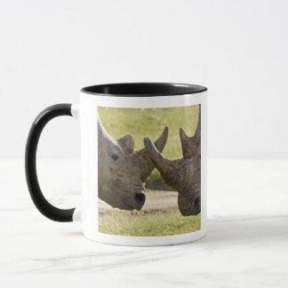 Mug L'Afrique. Le Kenya. Rhinocéros blancs combattant