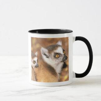 Mug L'Afrique, Madagascar, réservation privée de