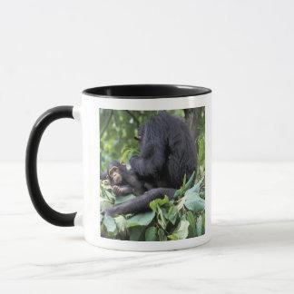 Mug L'Afrique, Tanzanie, chimpanzé de femelle de Gombe