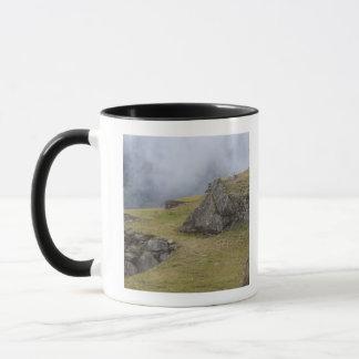 Mug Lama (glama de lama) parmi les terrasses d'Inca à