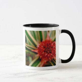 Mug L'Amérique Centrale, Costa Rica, San Vito, Wilson