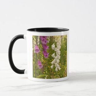 Mug L'Amérique du Nord, Canada, îles de la Reine